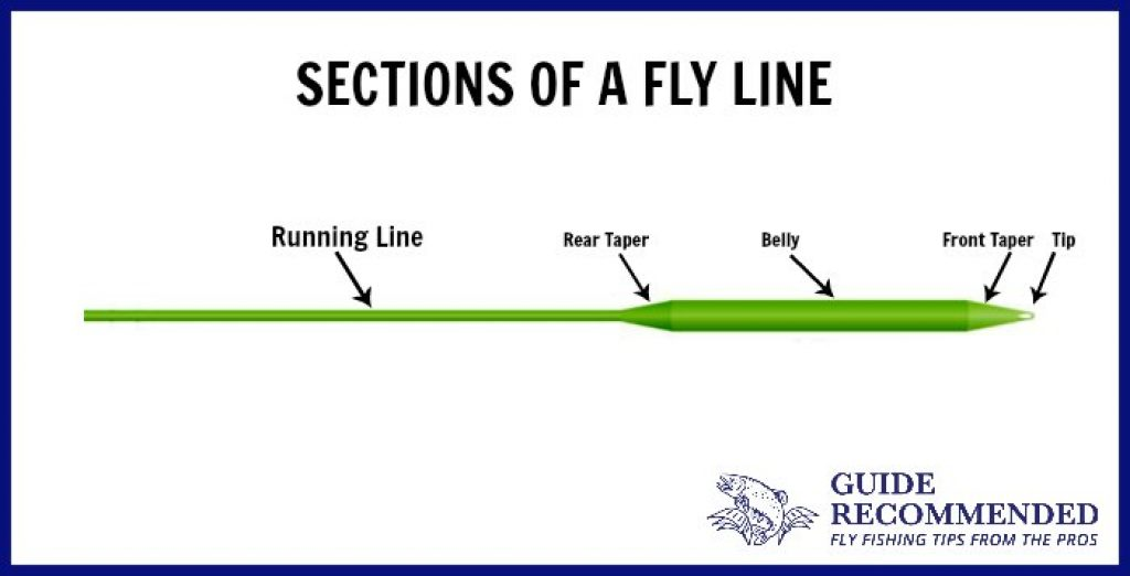 Sections of Fly Line
