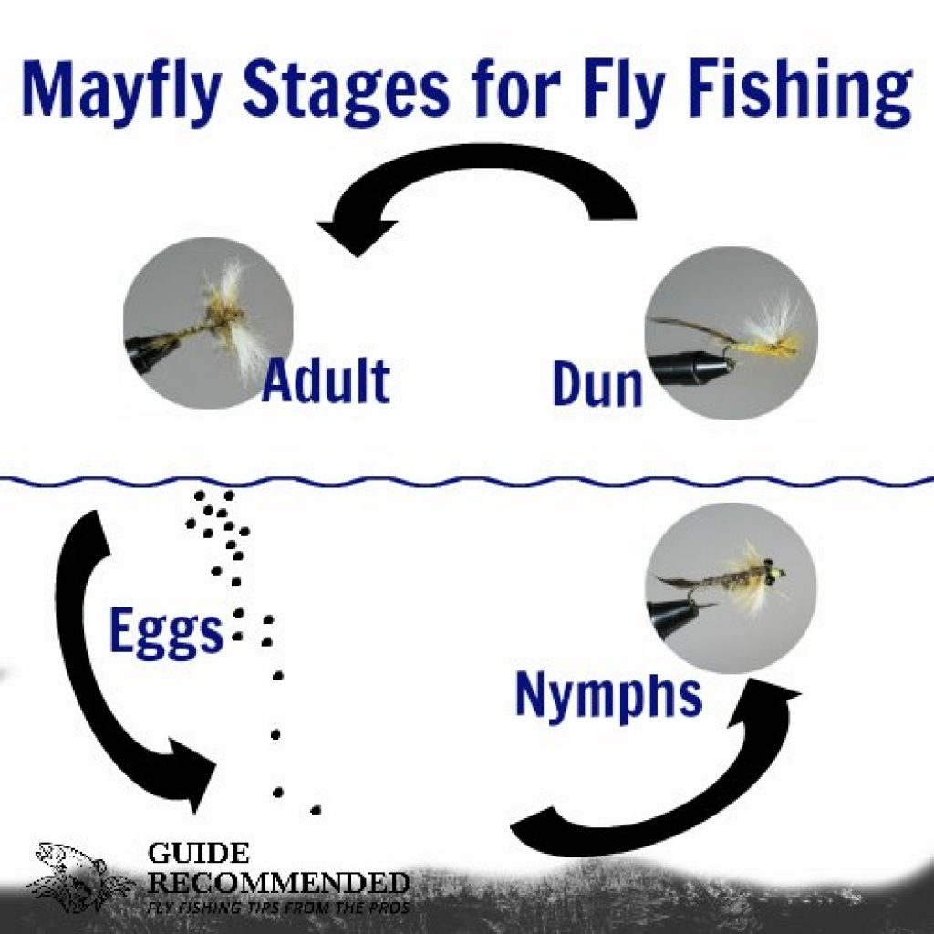 may fly stages