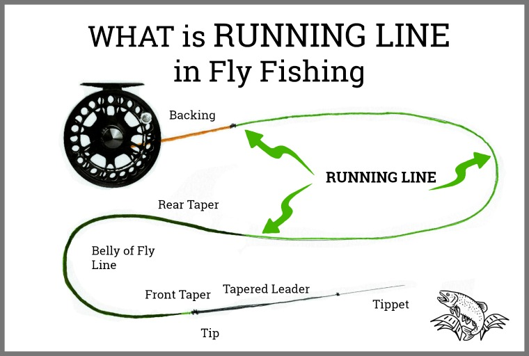 What is RUNNING Line in Fly Fishing: Is it Different than Shooting Line?