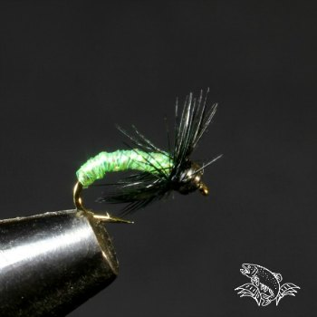 green caddis nymph