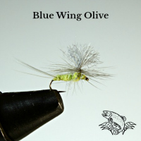 Blue Wing Olives