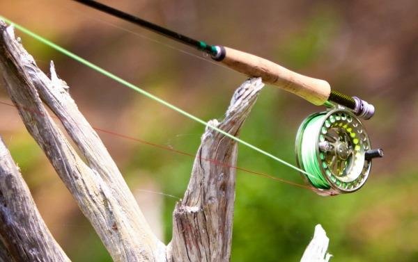 Fly Fishing Gear for Arkansas