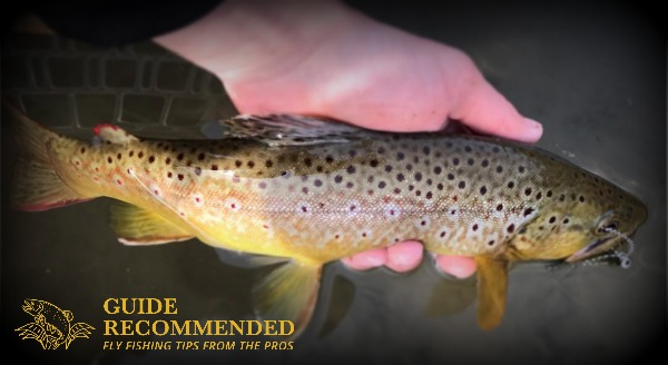 Fly Fishing Little Red River Brown Trout