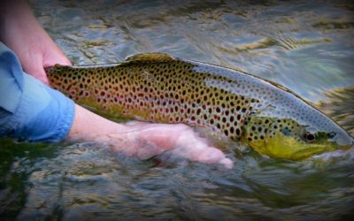 14 Best Places to Fly Fish in Colorado: MAPS INCLUDED