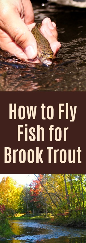 How to Fly Fish for BROOK TROUT