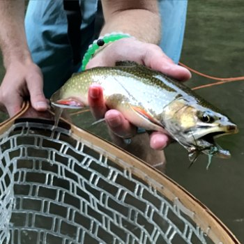 Whitewater River Brook Trout