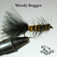 Wooly Bugger