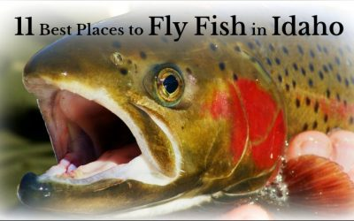11 Places to Fly Fish in Idaho: Maps Included