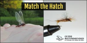 Fly Fishing Matching the Hatch