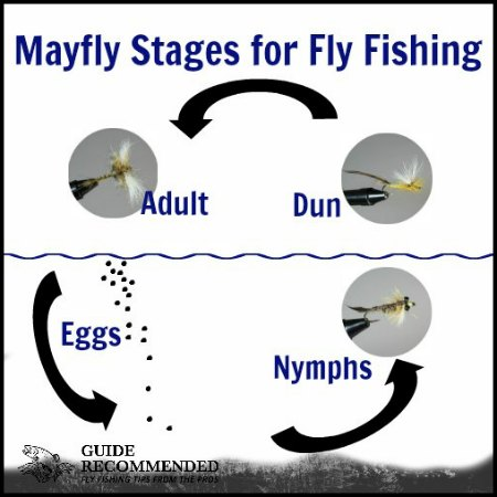 Life Cycle of a Fly Fishing Fly