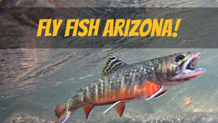11 Best Places to Fly Fish in Arizona: MAPS INCLUDED