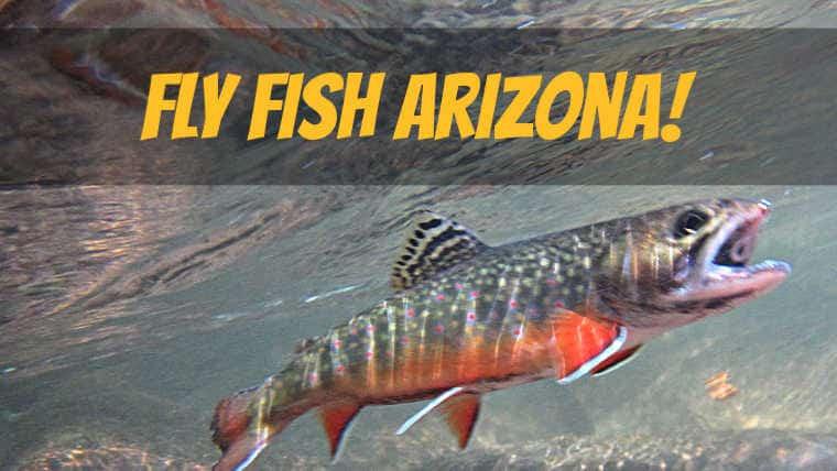 Where to Fly Fish Arizona