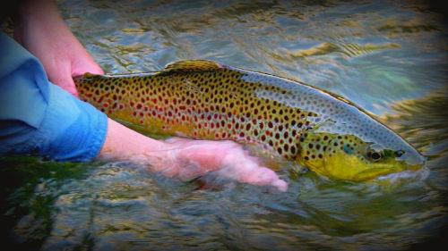 Fly Fishing Colorado Springs Area