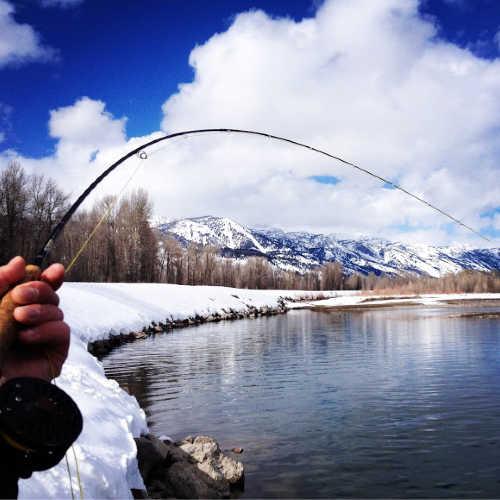 Winter Fly Fishing on Jackson Lake Dam