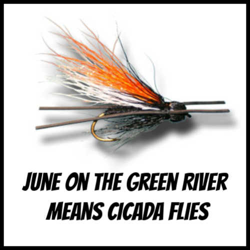 Cicada Flies for the Green River