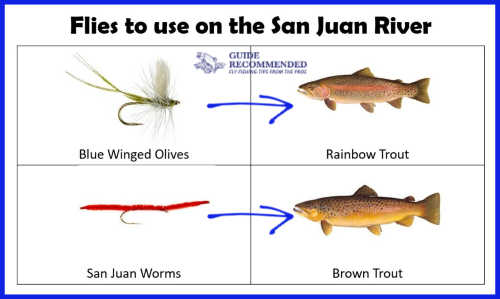Best Flies for the San Juan River in New Mexico