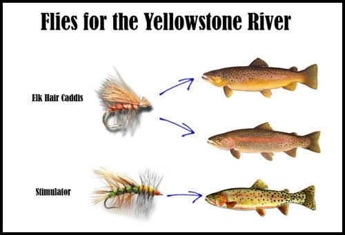 Best Flies for the Yellowstone River in July
