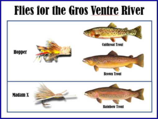 Flies for Gros Ventre River