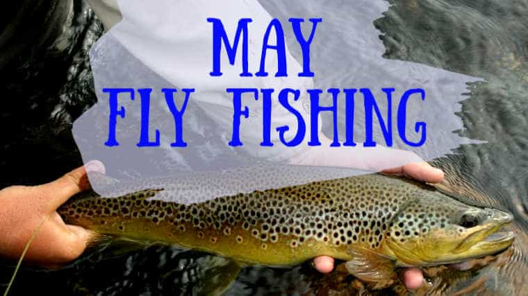 Fly Fish in May