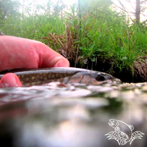 Texas Trout on a Fly