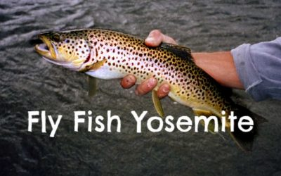 Where to Fly Fish in Yosemite National Park [with MAPS]