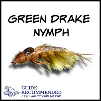 Green Drake Nymph for Fly Fishing in the Park City UT area