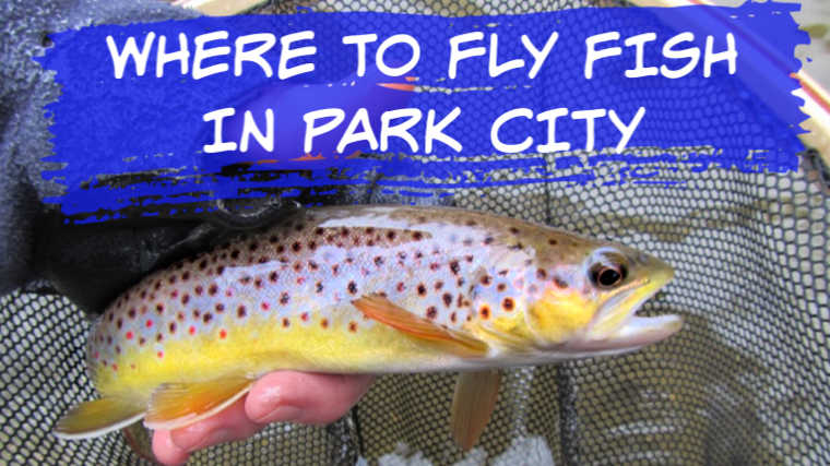 7 Best Places to Fly Fish in Park City UT (MAPS included)