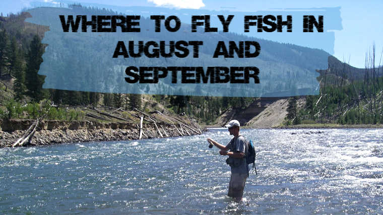 Fly Fish August September