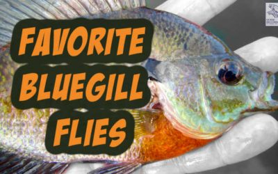 15 Best Flies For Bluegill [with Video and Setup]