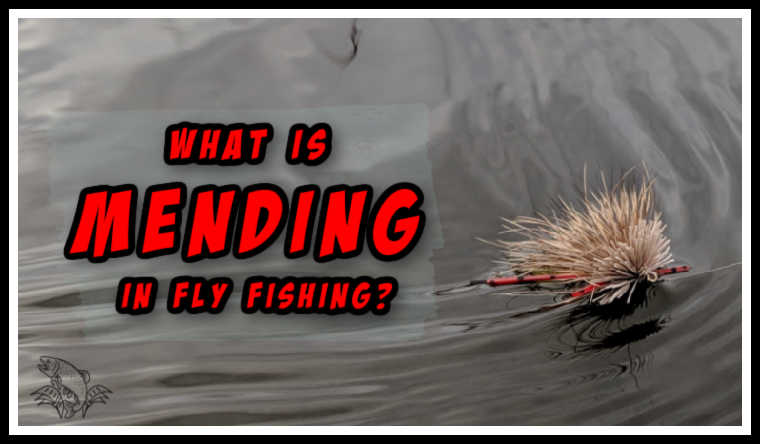 What is Mending in Fly Fishing (With Video)