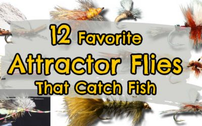 What is an Attractor Fly in Fly Fishing [12 Favorites and Setting it Up]