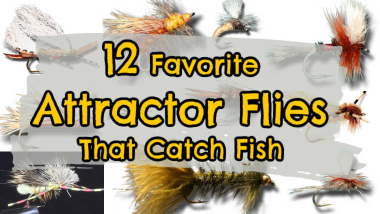 Attractor Flies for Fly Fishing