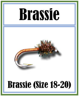 Brassie a Deadly Nymph