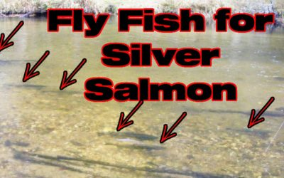 Fly Fishing for Silver Salmon [Alaskan Wisdom]