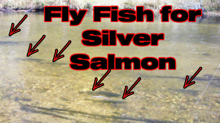 Fly Fishing for Silver Salmon [Alaskan Wisdom]