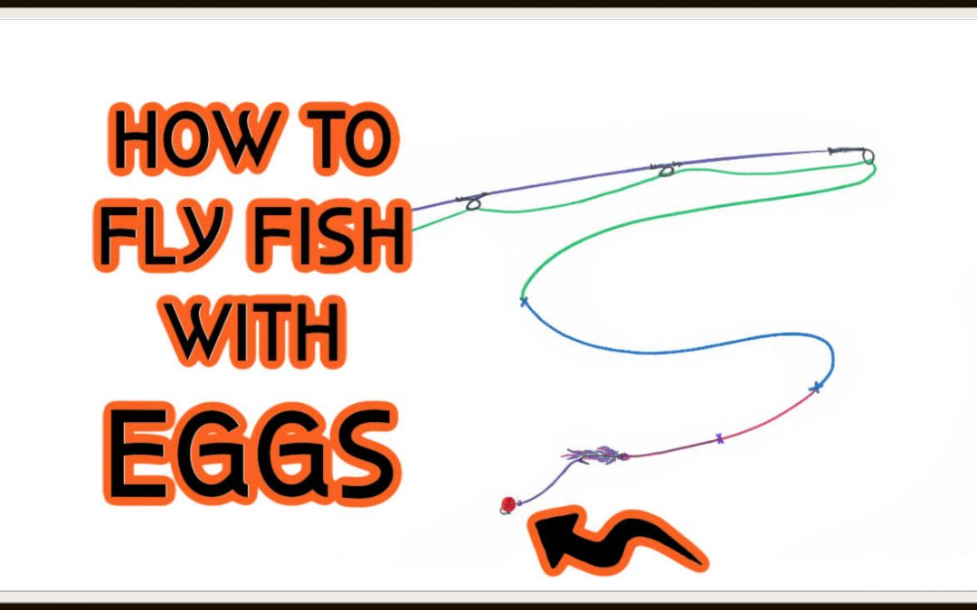 How to Fly Fish with Eggs (A Complete Guide)
