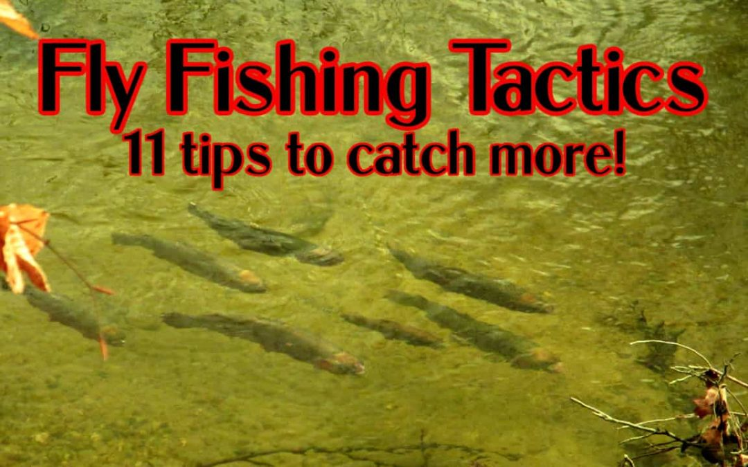 Fly Fishing for Selective Trout