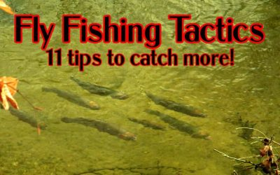 11 Fly Fishing Tactics to Catch Selective Trout