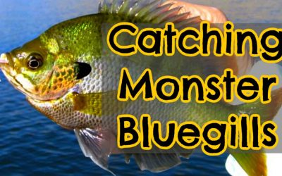 What is the Biggest Bluegill Ever Caught?