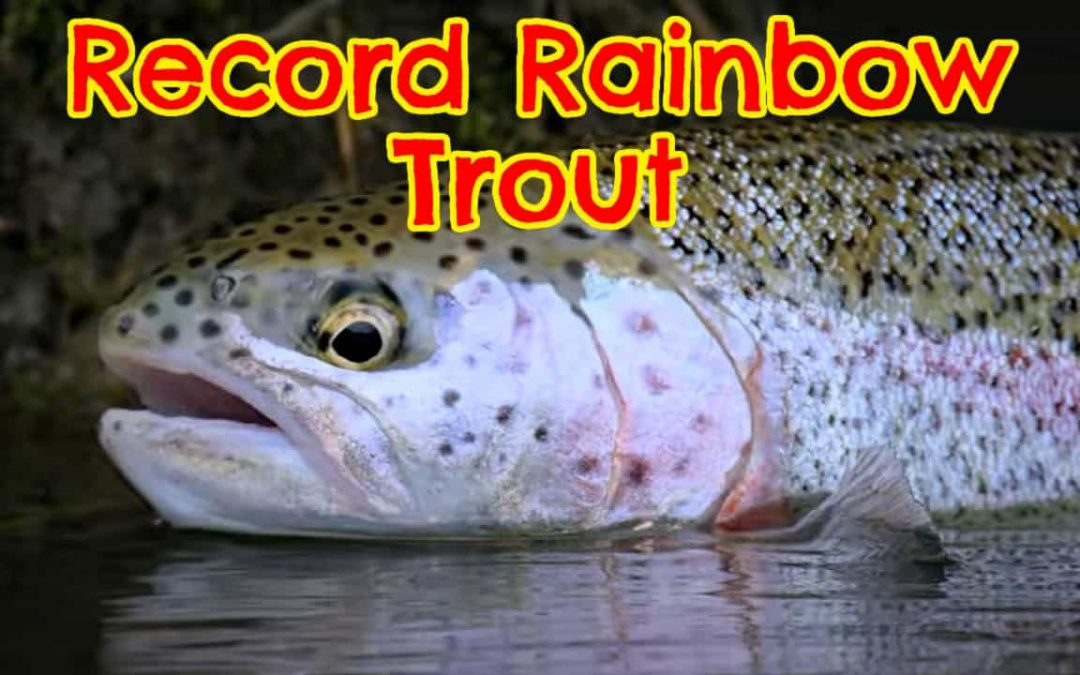 Record Rainbow Trout