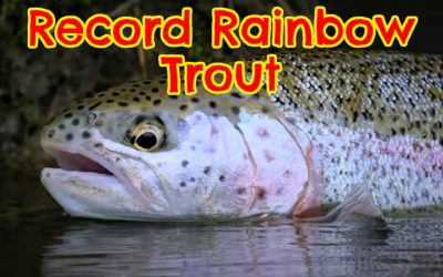 What is the Biggest Rainbow Trout Ever Caught? (with Maps and Tips)