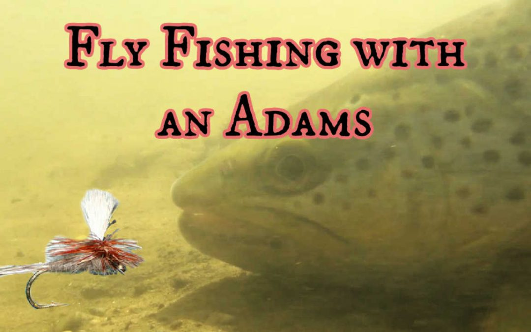 Using the Adams Fly Fishing