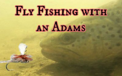 How to Fly Fish with the Adams Fly [Fish  & Tie]