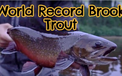 What is the Biggest Brook Trout Ever Caught? (With Maps and Tips)
