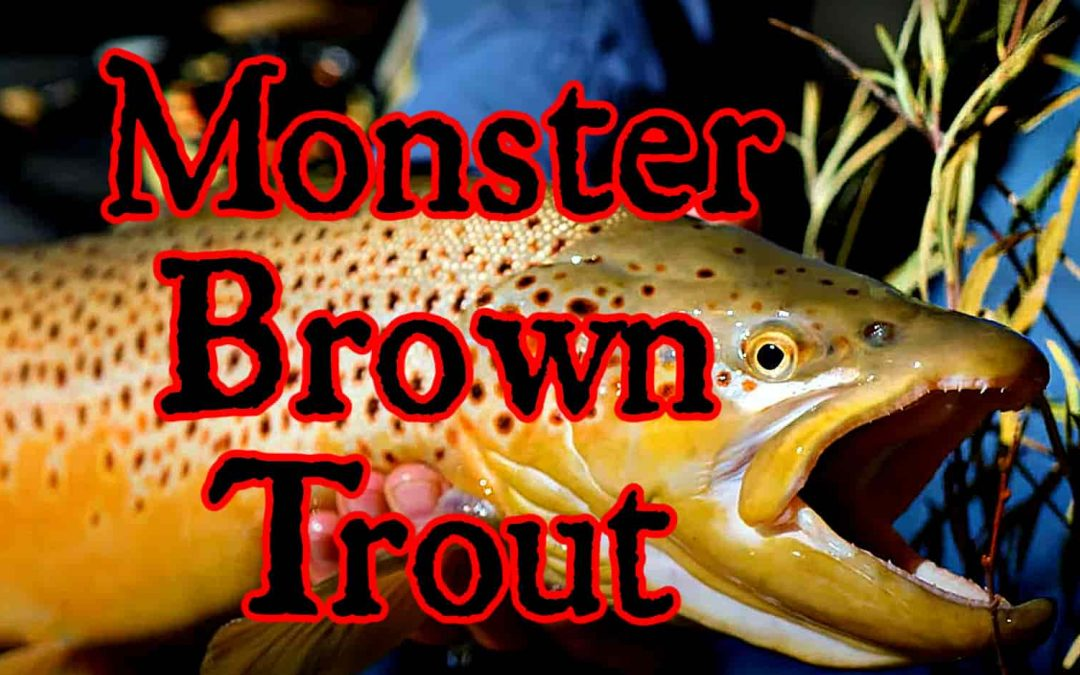 What is the Biggest Brown Trout Ever Caught? (with Maps and Tips)