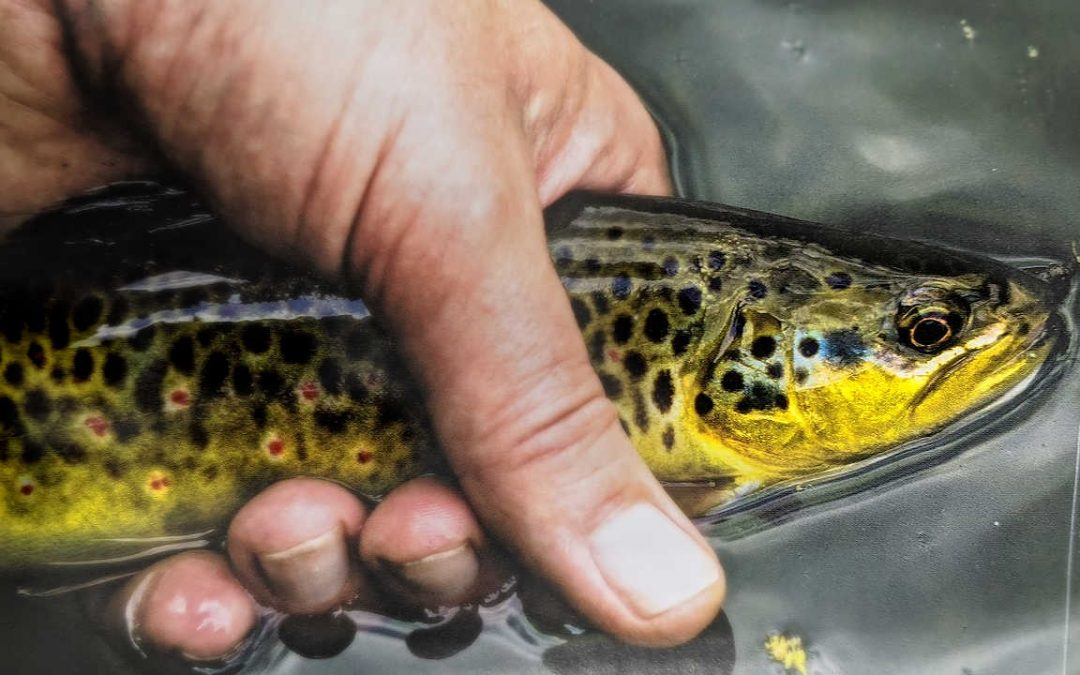 FLY FISHING TACTICS – Learn the Art of Presentation