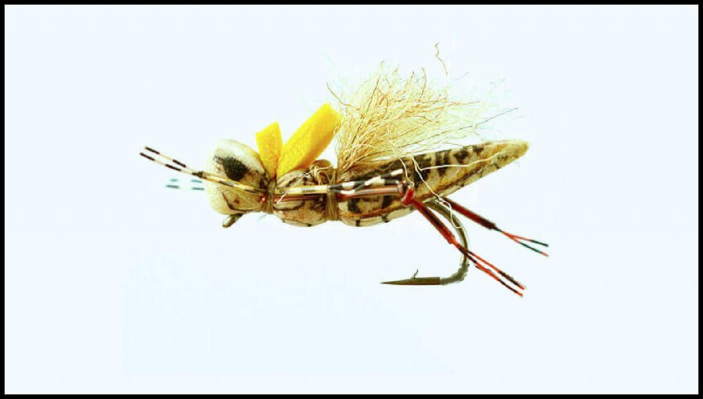 Henneberry Hopper size 10